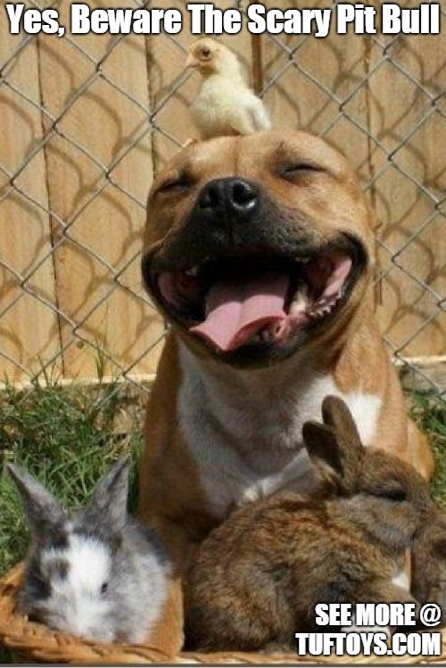 Funny Dog Memes Part 1 Happy Animals Pitbulls Happy Dogs