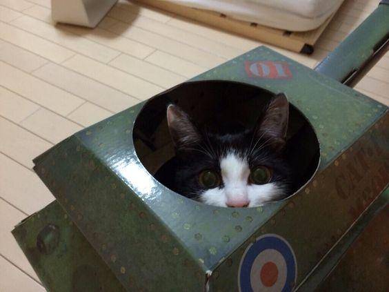 にゃーちる 猫