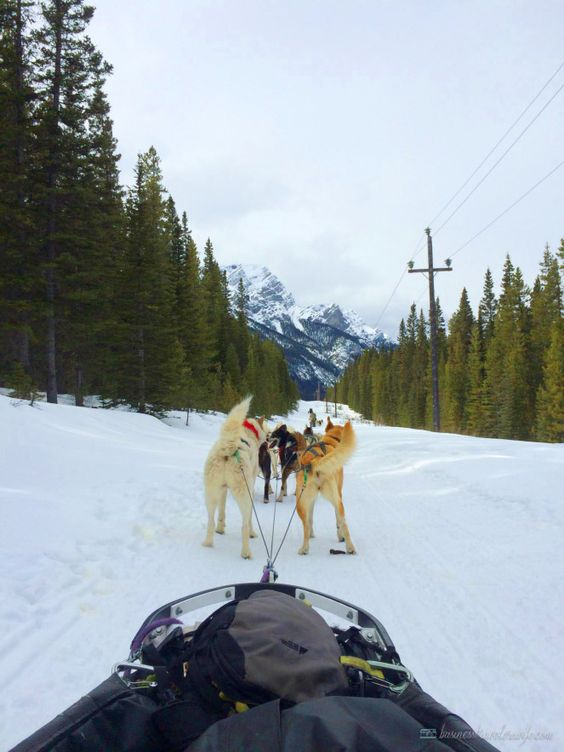 POVs That Will Make Dogsledding Your Next Adventure ♥