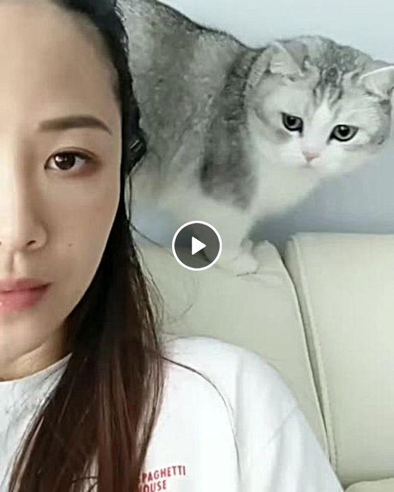 O amor infinito de um gatinho por sua dona