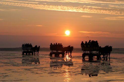 Sonnenuntergang: Rückkehr der Wattwagen von Neuwerk - Haus Nautic 319 Ferienwohnung in Cuxhaven (Döse)