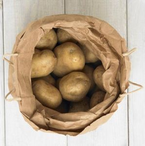 Growing recycled potatoes indoors