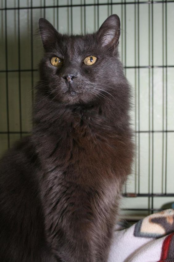 Hi, I'm Pumba! I'm a handsome dude, and very lovable. One of my favorite things to do is give hugs and I love to carried around or sit on your lap. I do have fuzzy hair so need to be brushed occasionally, and it feels good! I'm ok with other...