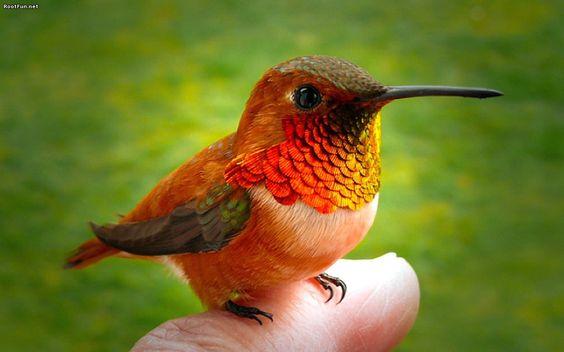 Hummingbird-Finger