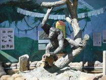 North Coast Storytellers bring stories to Sequoia Park Zoo in Eureka