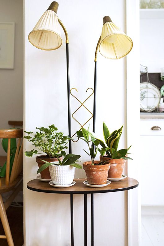 Great styling with indoor plants. (when in drought / sfgirlbybay): House Plants, Lamp Table, Drought Houseplants, Plantas Interior Houseplants, Living Room, Houseplants Sfgirlbybay, Indoor Garden, Indoor Plants