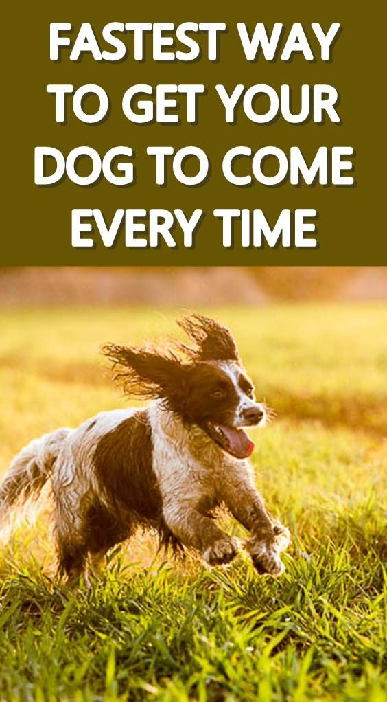 Discover How To Get Your Dog To Come When Called Without Stressing