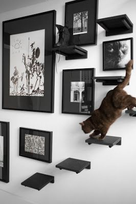 CAT STAIRS. It's just really funny thinking about coming to someones house and looking over to see a cat climbing down the wall like this ^.^ hahaha: