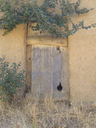 .Door with vine.
