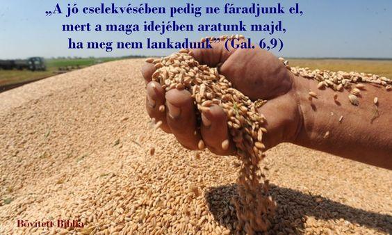 A jó cselekvésében pedig ne fáradjunk el...