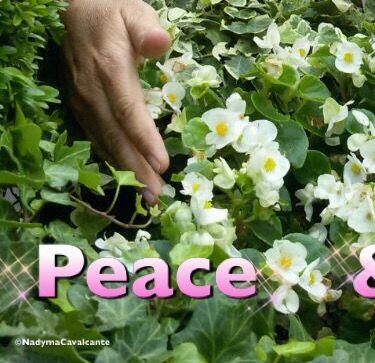 """""""Um dia aprenderemos realmente a cultivar a paz e exercitar o amor ao próximo. Eu acredito! A mudança por um mundo melhor para todos, começa no esforço de cada um."""" (Nadyma)"""