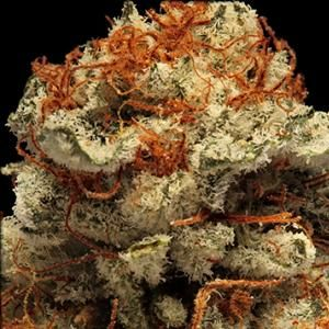 If you have thought of using Marijuana here is some good information....The Top 7 Marijuana Strains For Treating Fibromyalgia.