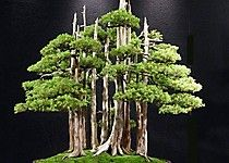 Goshin Bonsai  Goshin ('protector of the spirit') is a bonsai created by John Y. Naka. It is a forest planting of eleven Foemina junipers, the earliest of  which Naka began training into bonsai in 1948. Naka donated it to the National Bonsai Foundation in 1984.