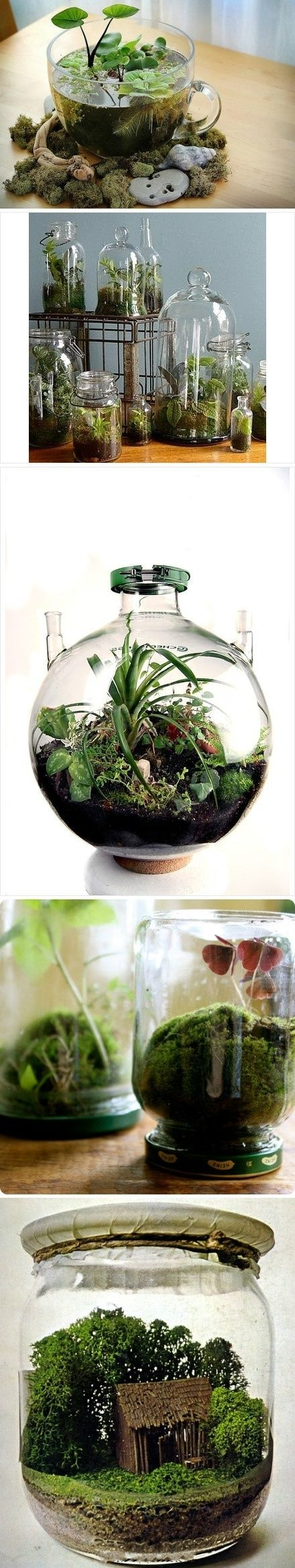 mini jardim aquatico:Bottle Terrarium Ideas