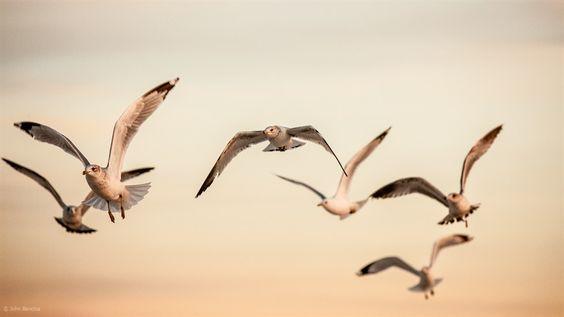Closing Flight   John Bencina Photography