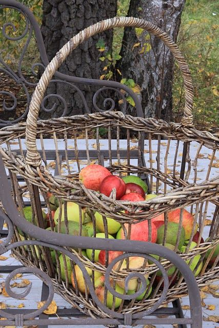 apple-picking basket. My family used to go apple picking every year. I miss it and my family who are no longer with us.