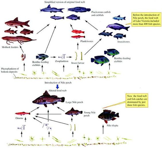 Zoo biology, ecology, etc journal articles?