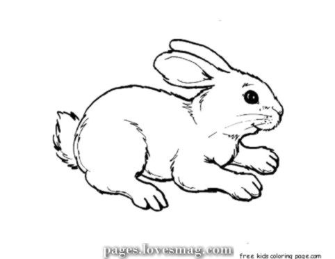 Bunny Coloring Pages Quiz on a budget