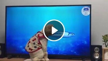 Preciso pegar esse peixe mas está difícil