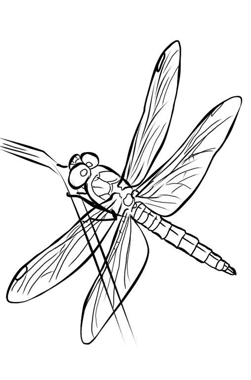 Free Printable Dragonfly Coloring Pages For Kids | Butterfly coloring page,  Animal coloring pages, Coloring pages for kids | 770x509