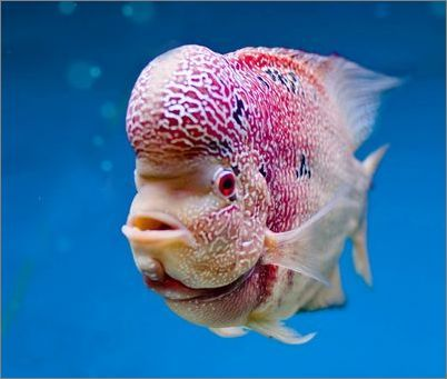 Strange fish | Water Dwellers | Pinterest | Fish, Gears ...