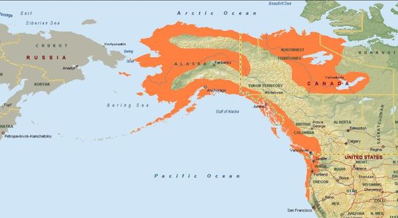 Image result for Wild Alaskan salmonsockeye salmon live