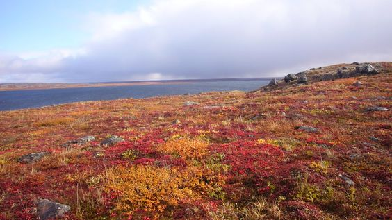 Bioma: Tundra. Lugar al que corresponde: America del Norte. Problemas ambientales: Olas de calor.