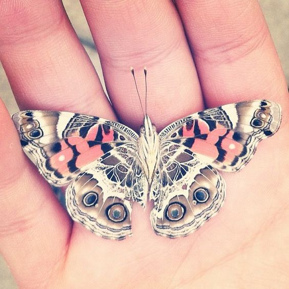 Butterfly on its back