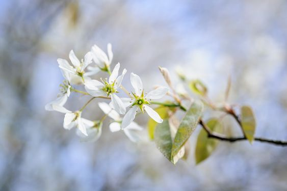 Advice on which trees and shrubs are suitable for clay and heavy soils, from the…