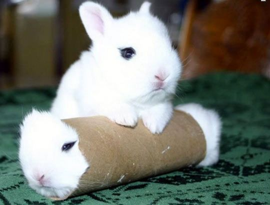 Real bunny roll… I don't understand how this happened.