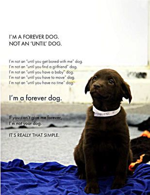 Patterdale Terrier... like Bella!  And I agree with what this says.