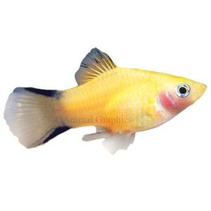 Fish gold and features of on pinterest for Petsmart fish guarantee