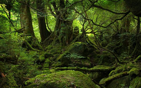 forests of the world | Yakushima forest