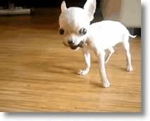 Google Image Result for http://petslady.com/files/imagecache/BlogTeaserImage/blog1/Scary_little_dog.gif