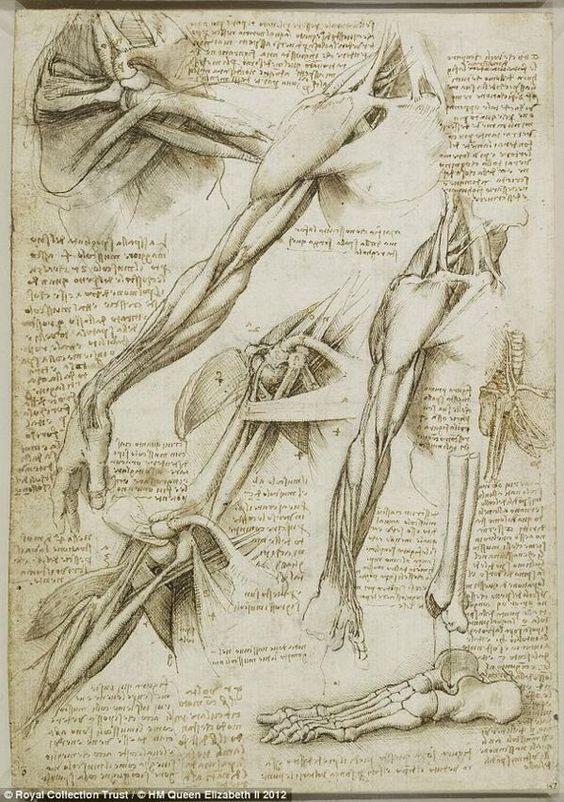 Leonardo da Vinci's drawings: