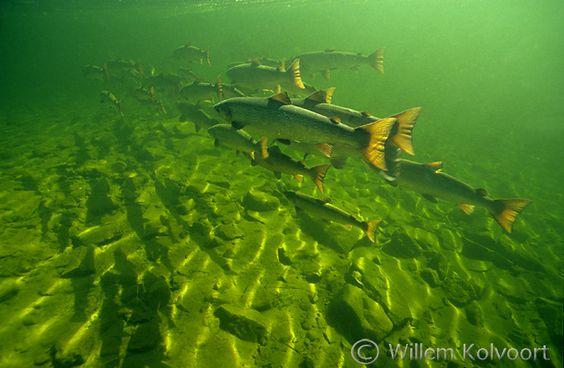 onderwaterfotografie in NL
