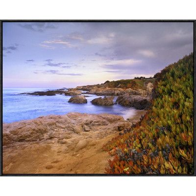 Global Gallery Ice Plant Growing on Cliffs at Bean Hollow Beach, California by Tim Fitzharris Framed Photographic Print on Canvas Size: