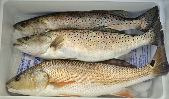 Drum and trout caught in the White Oak