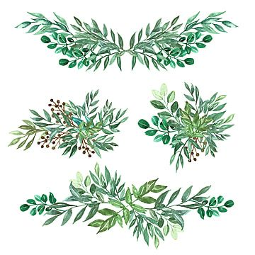 Set Of Arrangement And Bouquet Of Greenery Leaf Floral Bouquet Greenery Png And Vector With Transparent Background For Free Download Rose Drawing Drawing Wallpaper Watercolor Leaves