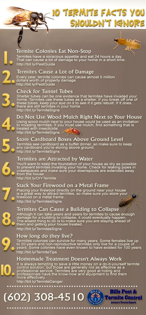 Termites can cause a home a lot of damage. Make sure you know your facts and what to look for with termite infestation and keep your home safe.