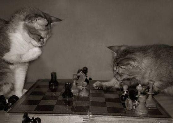 「ネコの画像」をうpするスレ