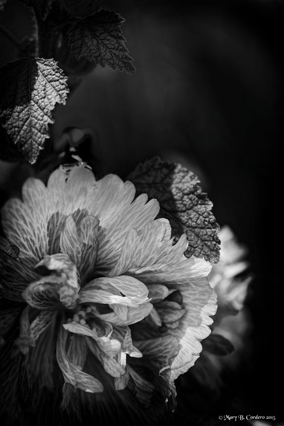 Crinkled Beauty by Mary The petals of this unusual flower are so delicate that they seem to be made of tracing paper. http://www.fineartphotographycreations.com