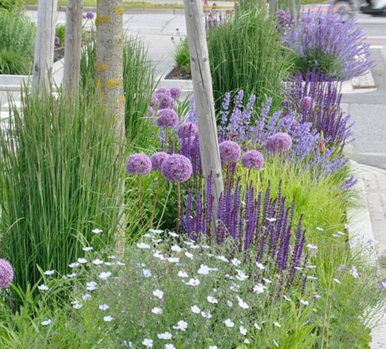 SUSTAINABLE ROMANCE: Love this idea of planting in between the sidewalk and street. Allium giganteum (Allium 'Globemaster'), steppe sage (Salvia memorosa 'Caradonna'), catmint (Nepeta x faassenii 'Walkers Low') and peat reed grass (Calamagrostis x acutiflora 'Karl Foerster').: