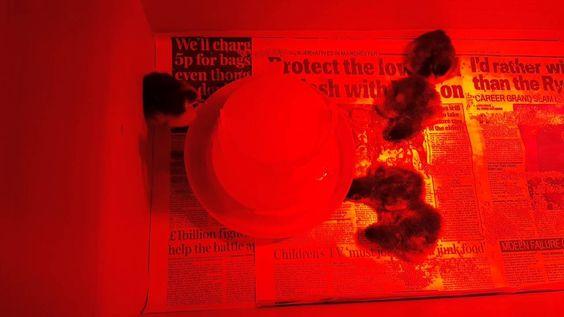 Copper black marrans from the darkest eggs around
