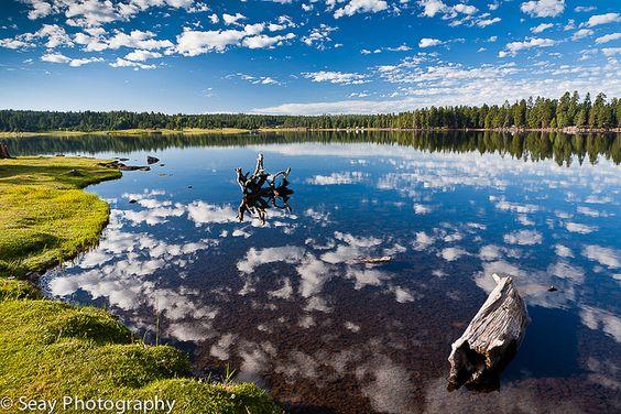 Hawley lake on the white mountain apache indian for Apache lake fishing