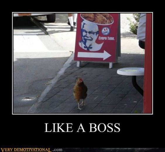 "A rooster in TN has become famous for walking by a fried chicken restaurant everyday. Though it's a little sad because he's always walking by saying, ""Linda! Where are you Linda!"""