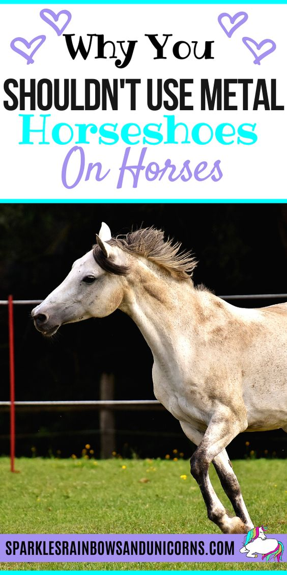 You know horses wear shoes and have seen a metal horseshoe before, but do horses actually need to wear shoes? Did you know that like wild horses, some horses in captivity don't wear shoes? Learn more about the harms of metal horseshoes, the mechanisms of the hoof and alternatives.