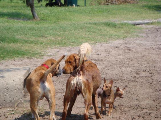 Lake Baldwin Dog Park Facebook