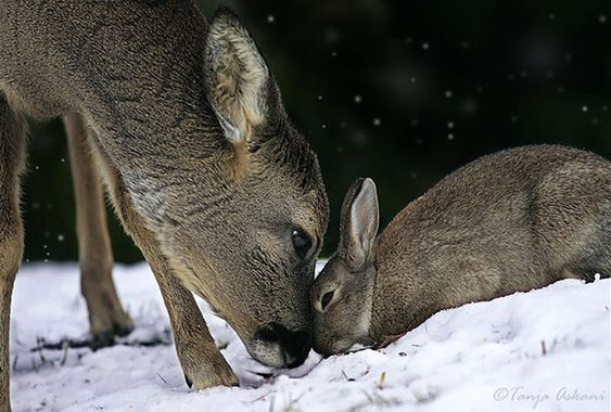 15 of the Most Unusual Animal Friendships that will Melt your Heart 64 - https://www.facebook.com/diplyofficial: