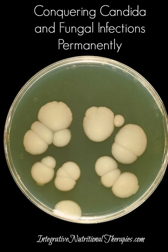 Conquering Candida and Fungal Infections Permanently - Melissa Malinowski